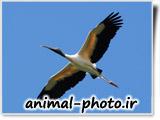 strok birl flying in the sky