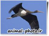 black strok bird photo gallery