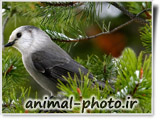 animal birds photo gallery