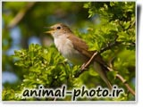 nightingale_photo_gallery
