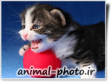 cat pictures site