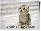 عکس بچه گربه ها