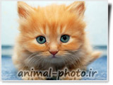 baby cat - بچه گربه