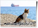 گالری عکس های ناز و زیبا از بچه گربه ها