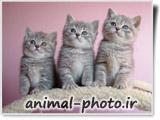 بچه گربه ملوس
