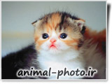 best animal baby site cats