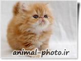 تصاویر جدید بچه گربه ها
