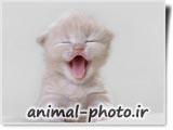 بچه گربه شیرین و بامزه