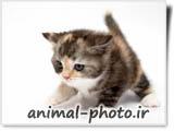 گالری عکس بچه گربه های ملوس