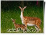 deer picture gallery