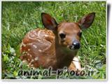 best animal photo iran - deer