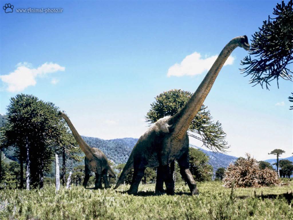 دایناسور گیاه خوار