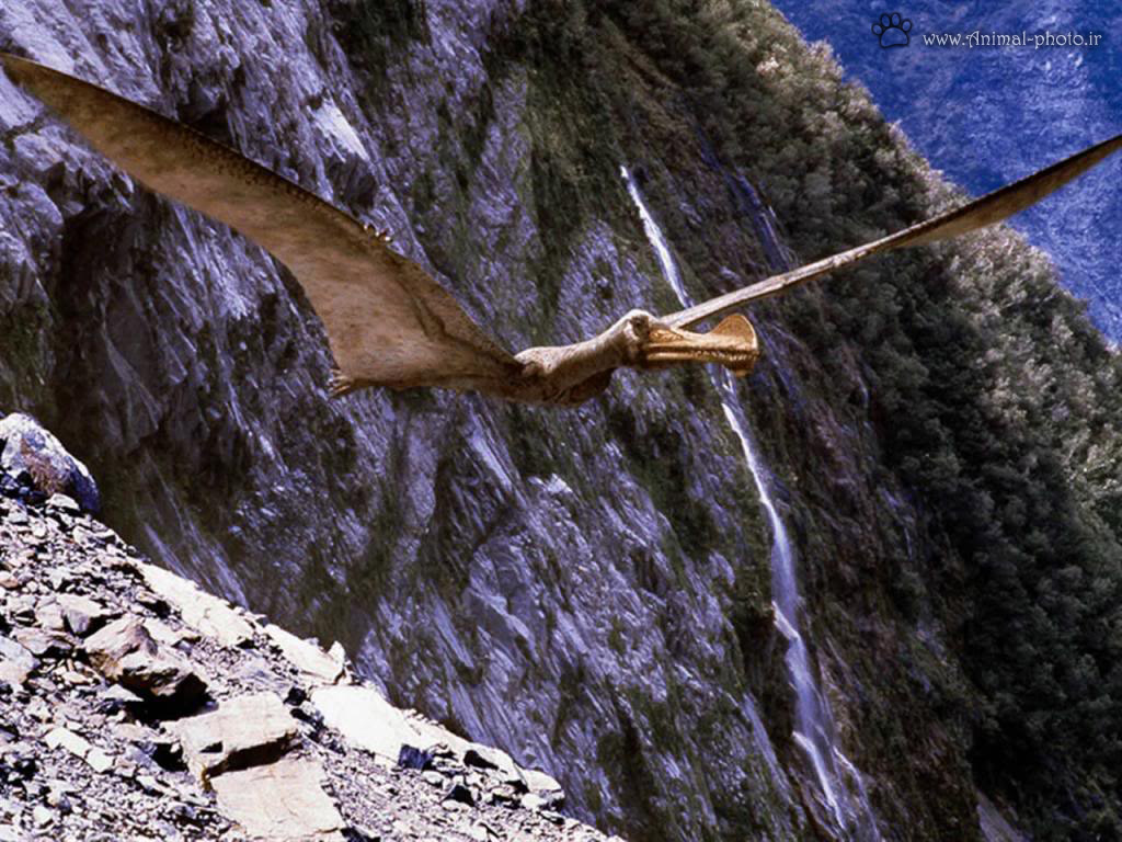 عکس دایناسور پرنده