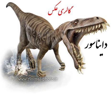 گالری عکس دایناسور ها