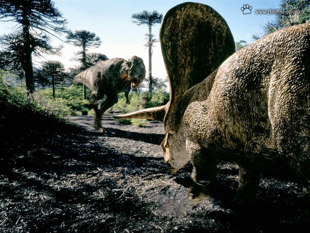 نبرد بین دایناسور ها