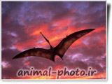 دایناسور پرنده