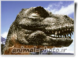 dinosaur photo gallery