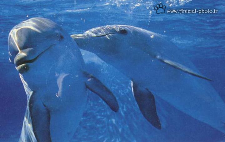 عشق و دوست داشتن دلفین ها