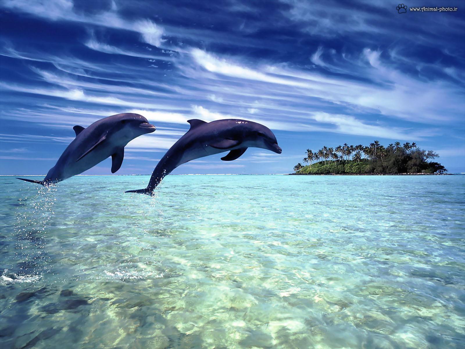 wallpaper hd dolphin fish