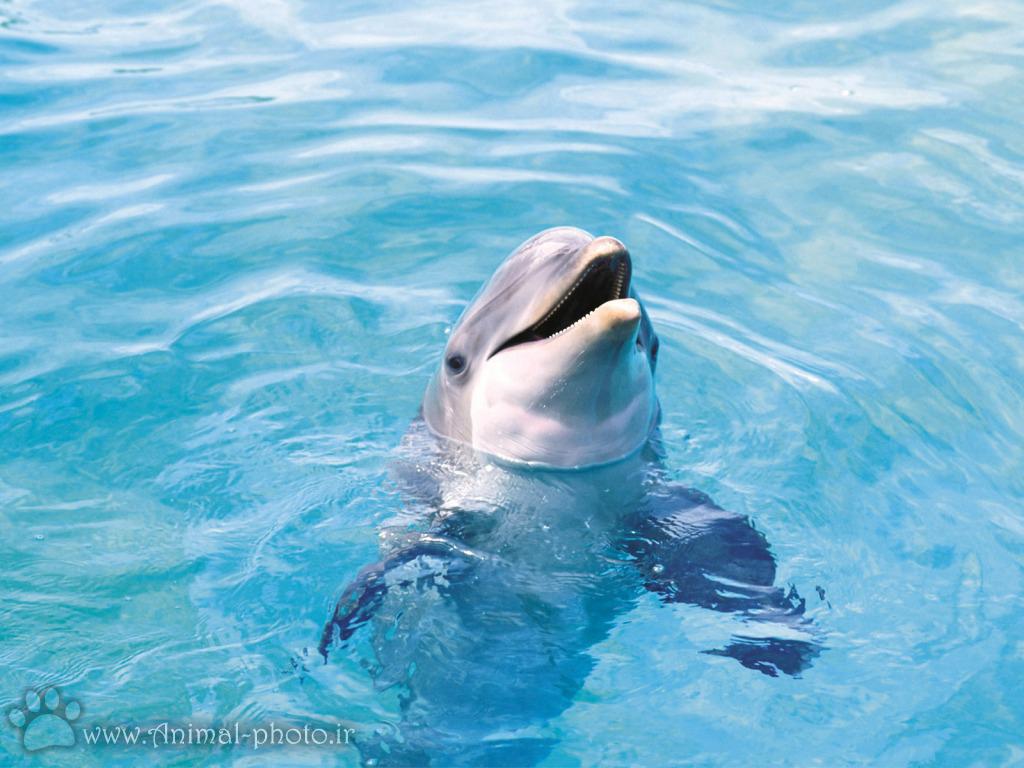 تصویر دلفین ها در استخر