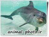 عکس زیبای دلفین ها