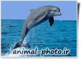 پرواز دلفین ها