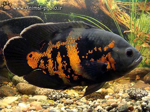 ماهی fish