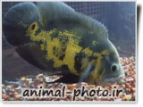 گالری عکس حیوانان - ماهی ها