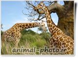 animal-photo.ir