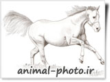 نقاشی اسب - نقاشی حیوانات