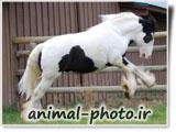 گالری عکس اسب ها