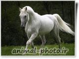 زیباترین تصاویر اسب ها