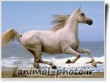 اسب در ساحل