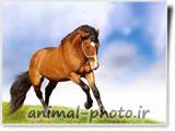 والپیپر زیبای اسب و حیوانات