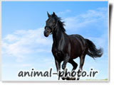 horse photo and image gallery