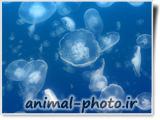 jellyfish photo gallery