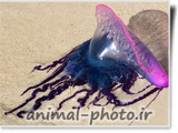 jellyfish picture image