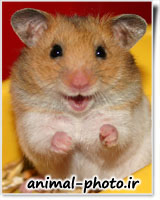 cute hamster picture