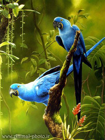 عکس خوشگل ترین طوطی دنیا