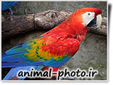 colorful parrots bird