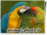 تصاویر طوطی رنگی خوشگل