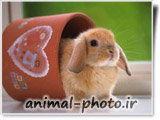 خرگوش ناز دوست داشتنی