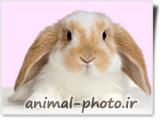 بچه خرگوش