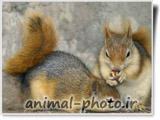 عکس دو سنجاب کوچولو و ناز