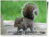 animal photo gallery